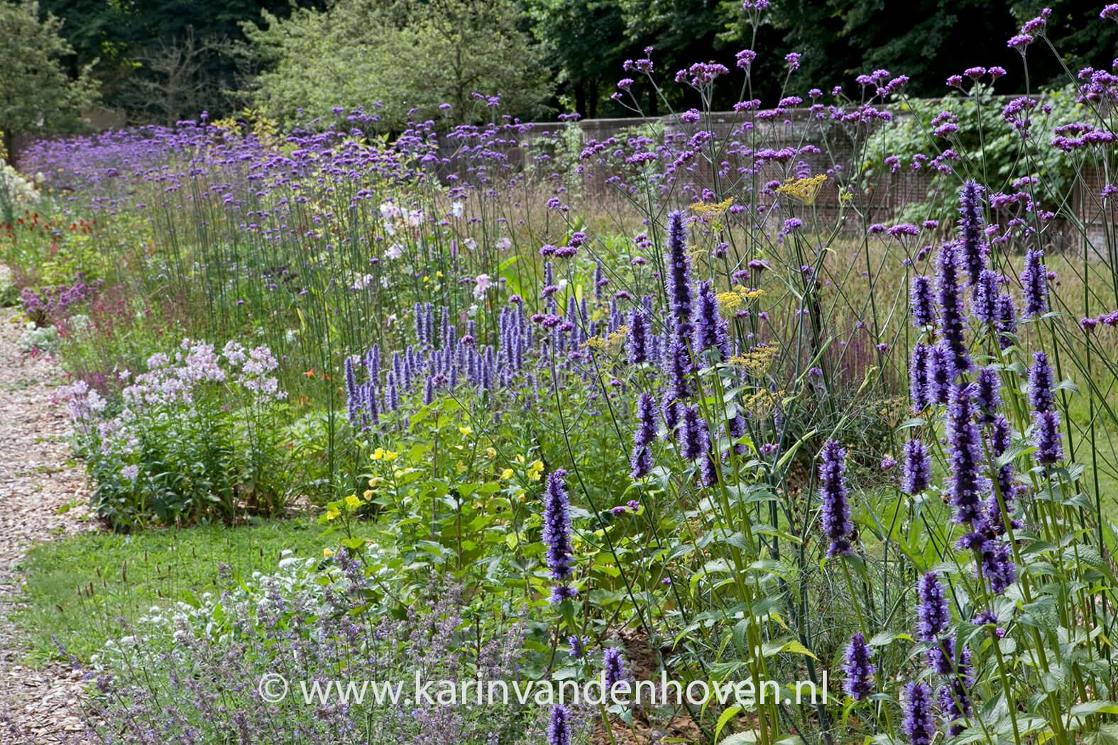 Vlinders zie je minder dan vroeger. Een vlindervriendelijke aanleg en inrichting van je tuin kunnen de natuur een handje helpen. Met nectarrijke planten kun je vlinders lokken naar je tuin.